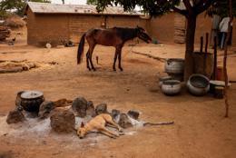 Africa;Benin;Courtyards;Dog;Dogs;Horse;Horses;Inner-Courtyards;Kaleidos;Kaleidos-images;Mangoe-tree;Tarek-Charara