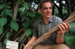 Banisteriopsis-Caapi,Ayahuasca,Hervé-Merliac,Kaleidos-images
