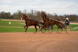 Domaine-de-Grosbois;Drivers;French-Trotters;Grosbois;Harness-racing;Horse;Horses;Kaleidos;Kaleidos-images;Marolles-en-Brie;Sulkies;Sulky;Tarek-Charara;Trot;Trotters;Trotting