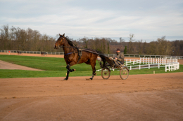 Domaine-de-Grosbois;Drivers;French-Trotters;Grosbois;Harness-racing;Horse;Horses;Kaleidos;Kaleidos-images;Marolles-en-Brie;Sulkies;Sulky;Tarek-Charara;Trot;Trotters;Trotting;Philippe-Allaire