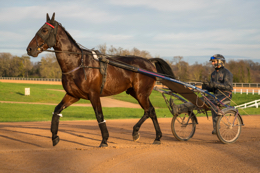 Domaine-de-Grosbois;Drivers;French-Trotters;Grosbois;Harness-racing;Horse;Horses;Kaleidos;Kaleidos-images;Marolles-en-Brie;Sulkies;Sulky;Tarek-Charara;Trot;Trotters;Trotting;Bazire;Jean-Michel-Bazire
