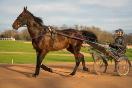 Domaine-de-Grosbois;Drivers;French-Trotters;Grosbois;Harness-racing;Horse;Horses;Kaleidos;Kaleidos-images;Marolles-en-Brie;Sulkies;Sulky;Tarek-Charara;Trot;Trotters;Trotting;Jean-Michel-Bazire;Bazire