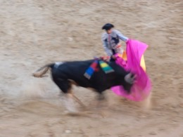 arène;bullfight;corrida;taureau;passes-de-capote;Espanha;Spanien;España;Spagna;Spain;Espagna;Espagne;arènes;arenas;arena;touro;Stier;toro;bull;combattimento;combate;Kampf;fights;combat;bullfighter;torero;picador;banderillero;matador;corridas;tauros;rejoneador;tauromaquia;bullfighting;Stierkampf;tauromachie;corni;cuernos;horns;Hörner;chifres;cornes;banderilles;banderillas;banderilleros;peones;picadors;bovino;vacuno;bovine;rinderähnlich;bovin;Pferd;horse;caballo;cavallo;cavalo;cheval;toréador;toreador;Espana;feria