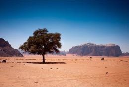 Arbres;Deserts;Déserts;Felsen;Kaleidos;Kaleidos-images;Landscapes;Landschaften;Middle-East;Moyen-Orient;Naher-Osten;Near-East;Paysages;Proche-Orient;Rochers;Rocks;Tarek-Charara;Trees;Wüsten