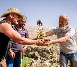 Saving the Iris Cedreti